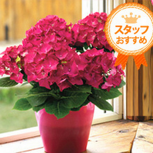 母の日オリジナル花鉢