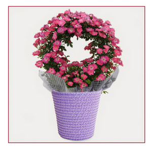 オリジナル鉢花